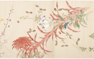 Many finely painted images of plants & flowers. Scroll (365 x 2850 mm.), with six joined sheets of p...