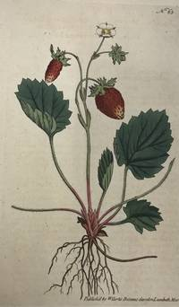Fragaria Monophylla; N. 63 (Strawberry of Versailles)