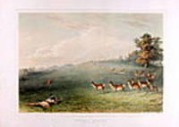 Antelope Shooting