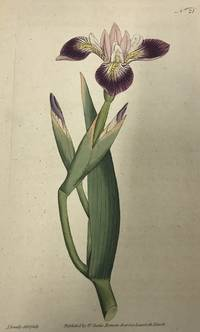 Iris Versicolor; N. 21