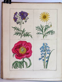 The Botanic Garden; consisting of Highly Finished Representations of Hardy Ornamental Flowering Plants, cultivated in Great Britain; with their names, classes, orders, history, qualities, culture, and physiological observations. Volumes I-VII