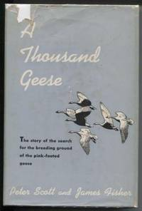 image of A Thousand Geese