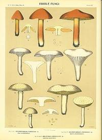 Edible Fungi.  Hygrophorus Puniceus Fr. Red Hygrophorus.  Hygrophorus Virgineus Fr. White Hygrophorus.  Boletinus Crisellus Pk. Grayish Boletinus