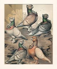 Cassell's Pigeon Book -