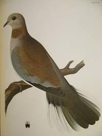 Posthumous Works of Charles Otis Whitman.  Vol. I - Orthogenetic Evolution in Pigeons, Vol. II -...