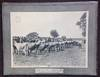 "(Portfolio of 10 Photographic Plates); ""Better Sires - Better Stock"" Livestock Improvement Series Campaign"