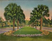 image of Giant Post Card: Palms and Flowers Sunshine State, Florida