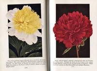 image of Garden Flowers in Color