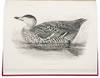 View Image 1 of 3 for Sir William Jardine's Illustrations of the Duck Tribe Inventory #38988