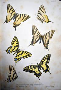 The Butterflies of Europe described and figured. Rhopalocera Europa descripta et delineata Vol II