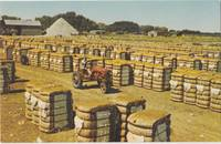 Bales of Cotton, The Deep South unused Postcard