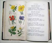An Illustrated Catalogue of British Plants. by C. E. Sowerby - 1st Edition - 1841 - from Roz Hulse and Biblio.com