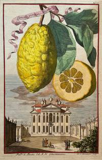 Limon ponzino Regino