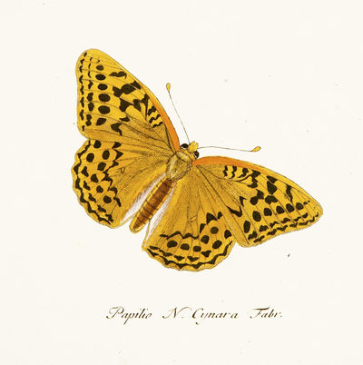Faunae Insectorum Germanicae Initia...
