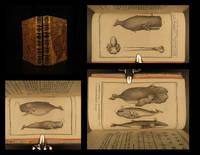 Histoire Naturelle Des Cétacées