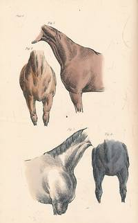 The Horse. His Beauties and Defects