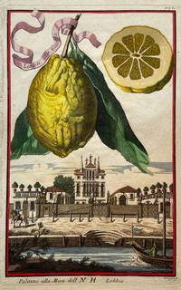 Limon da Gaetta