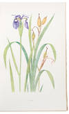 View Image 1 of 3 for The Genus Iris Inventory #34199