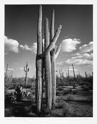 TOTEM  THE PAPAGO LEGEND OF THE CREATION OF THE GIANT CACTUS, CALLED SAGUARO, WITH TWELVE PHOTOGRAPHIC IMAGES BY ... by [Okeanos Press]: von dem Bussche, Wolf [editor & photographer] - 1993