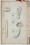 View Image 5 of 9 for The Anatomy of Plants. With an Idea of a Philosophical History of Plants, and Several Other Lectures... Inventory #3985