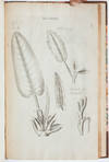View Image 6 of 9 for The Anatomy of Plants. With an Idea of a Philosophical History of Plants, and Several Other Lectures... Inventory #3985