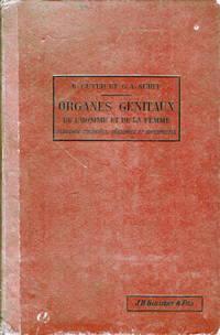 Les Organes Genitaux De L'Homme Et De La Femme Structure Et Functions