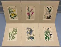 SIX original hand-colored flower prints from Curtis's Botanical Magazine 1840 - each one matted and with accompanying letterpress texts