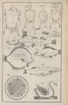 View Image 4 of 4 for El Tesoro de la Cocina Diccionario de las familias. La Cocina puesta al alcance de todas las intelig... Inventory #92806