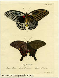 Papil. exotic. by  I. C. (engraved by) ENGRAVING - BUTTERFLY / MOTH) Bock - No date.  Ca. 1780. - from oldimprints.com and Biblio.com