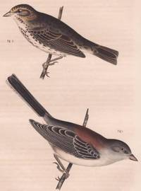 image of Original Handcolored Steel Engraving of the Savannah Sparrow (Passerculus  Sandwichensis) and New Mexican Snow Bird (Junco Dorsalis)