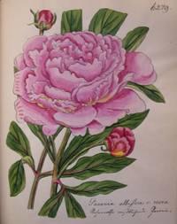 ABBILDUNGEN In Und Ausländischer Pflanzen [Ms. Title on Spine]
