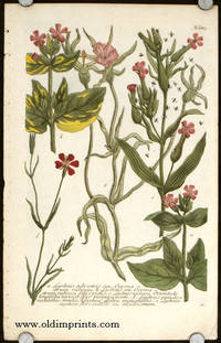 a. Lychnis sylvestris seu Ocymastrum rubrum.  b. Lychnis seu Ocymastrum rubrum folüs pictis.c.Lychnis viscosa Orientalis longifolia