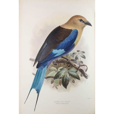 A Monograph of the Coraciidae, or...