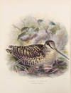 View Image 1 of 6 for The Geographical Distribution of the family Charadriidae, or the Plovers, Sandpipers, Snipes, and th... Inventory #38727