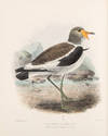 View Image 2 of 6 for The Geographical Distribution of the family Charadriidae, or the Plovers, Sandpipers, Snipes, and th... Inventory #38727