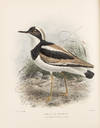 View Image 3 of 6 for The Geographical Distribution of the family Charadriidae, or the Plovers, Sandpipers, Snipes, and th... Inventory #38727