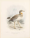 View Image 4 of 6 for The Geographical Distribution of the family Charadriidae, or the Plovers, Sandpipers, Snipes, and th... Inventory #38727