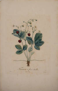 Fraisier a Fleurs Doubles (Strawberry with double flowers). Color engraving
