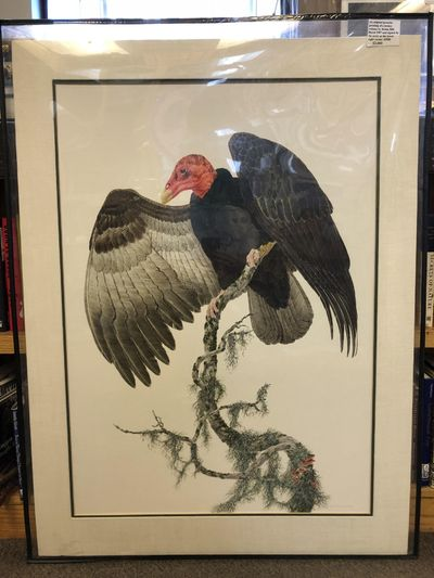 1989. An original gouache painting of a turkey vulture by Robin Hill; dated 1987 and signed by Hill ...