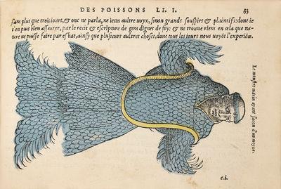 La Nature & diversité des poissons,...
