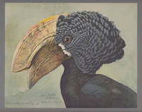 Album of Abyssinian Birds and Mammals from Paintings by Louis Agassiz  Fuertes