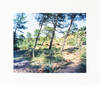 View Image 2 of 4 for Mont Sainte Victoire (Signed Limited Edition with Print) Inventory #25381