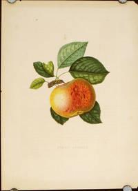 Pomme Averill.