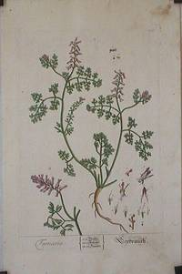 Fumaria (from A Curious Herbal).