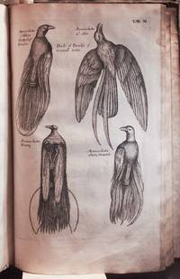 The ornithology of Francis Willughby of Middleton in the county of Warwick Esq, fellow of the Royal Society : in three books : wherein all the birds hitherto known, being reduced into a method sutable to their natures, are accurately described : the descriptions illustrated by most elegant figures, nearly resembling the live birds, engraven in LXXVII copper plate