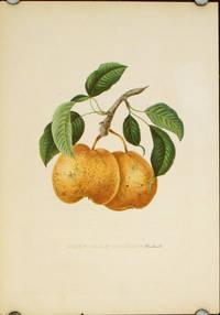 Poire Passe-Grassane (Boisbunel.).