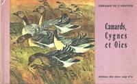 Canards , cygnes et oies