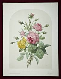 A HAND-COLORED LITHOGRAPH, ROSES MOUSSEUSES, ROSE JAUNE-SONFRE.