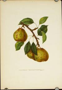 Rousselet Vanderweken (Gregoire.).