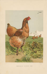 CINNAMON COCHIN HEN. by  Harrison (illus) TEGETMEIER -- COLOR WOOD-ENGRAVINGS) Weir - Ca. 1870. - from oldimprints.com and Biblio.com